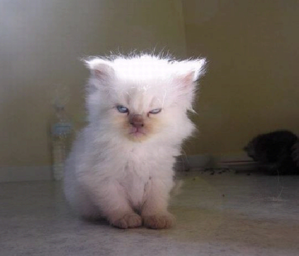 Cat When You Wake Up In The Morning Like