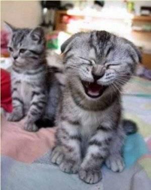 Cat laugh