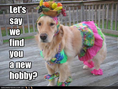 Dog fool