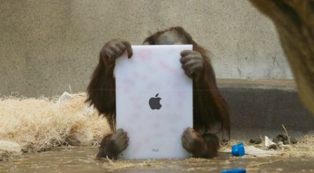 Ipad and monkey