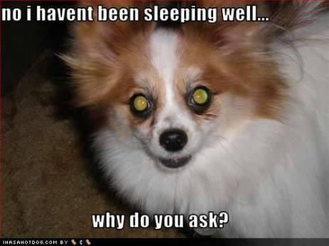 Dog sleepless