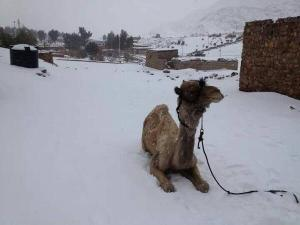Global Warming in Cairo