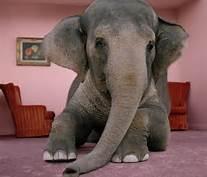 elephant in room