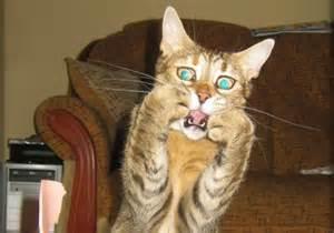 Kitty shock