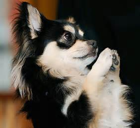 dog praying