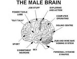 Men Are What Brain 47