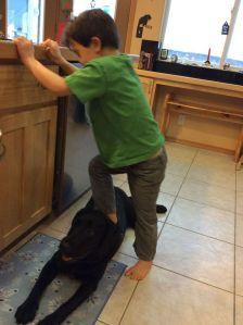 Trig steps on dog