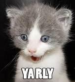 Kitten yarly