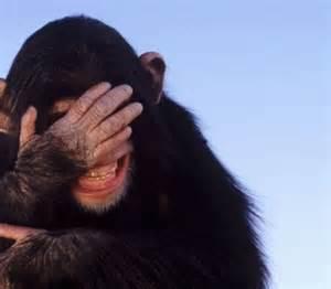 laughing monkey