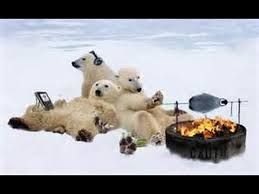 polar bears two
