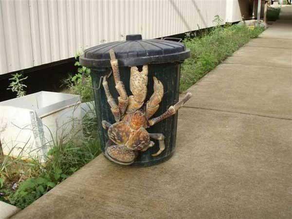 Big crab.