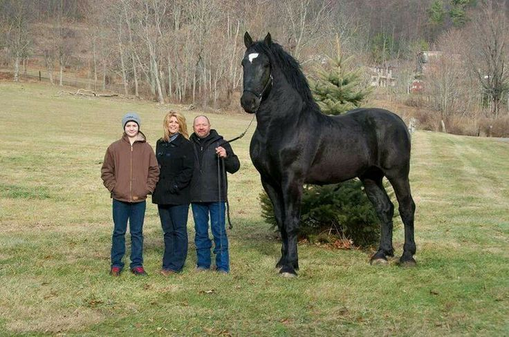 Wow. Is this not one of the most beautiful horses you have ever seen?